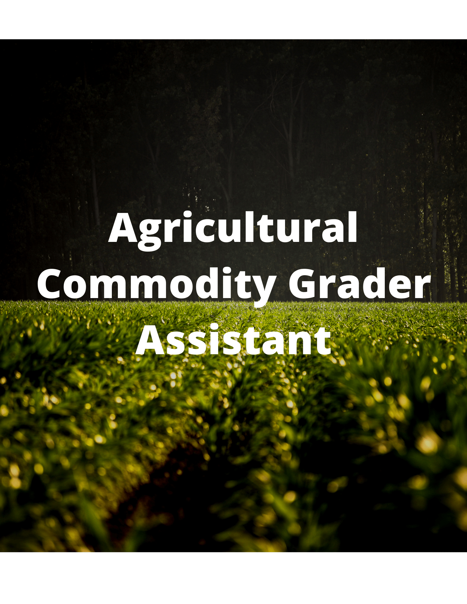 Grader assistant, Commodity Agriculture, ITSQuest, Roswell Jobs